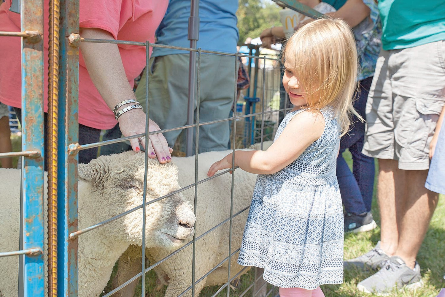 THE 2018 INTERNATIONAL Cowpea Festival and Cook-off takes place on Saturday, Sept. 8. Bring the kids out and enjoy all the fun activities like the petting zoo, where little Mabel Kirby got to pet some sheep last year.
