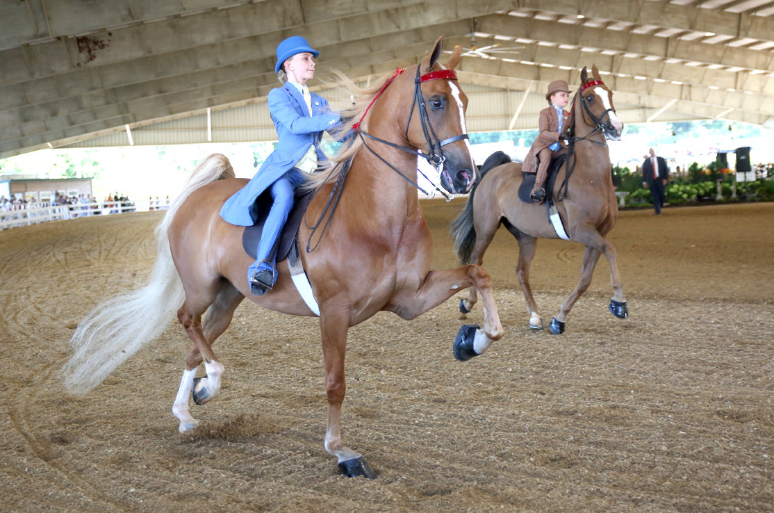 "RIDERS ABRIANNA BISHOP, left, and Enzie Scott round the corner of the ring on their steeds ""Cedarwind's Touch of Pride"" and ""Unchaperoned"" during Thursday's portion of the 5-day Cleveland Tri-State Charity Horse Show."