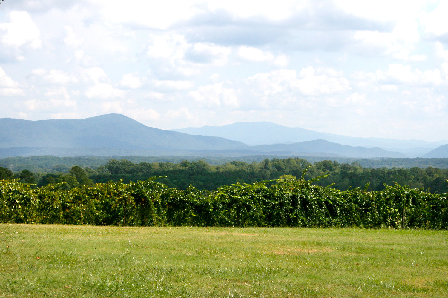MOUNTAINS TOWERING in the distance give Morris Vineyard's Mountain View label wine its name.