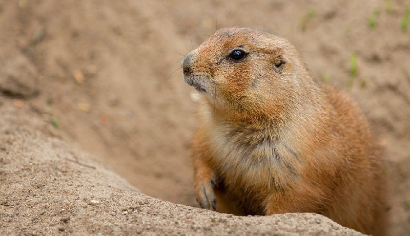 Join the Hudson Highlands Nature Museum on Saturday, February 2 at 10 a.m. to learn all about Groundhogs, take a walk outside to look for your shadow and make a groundhog craft!