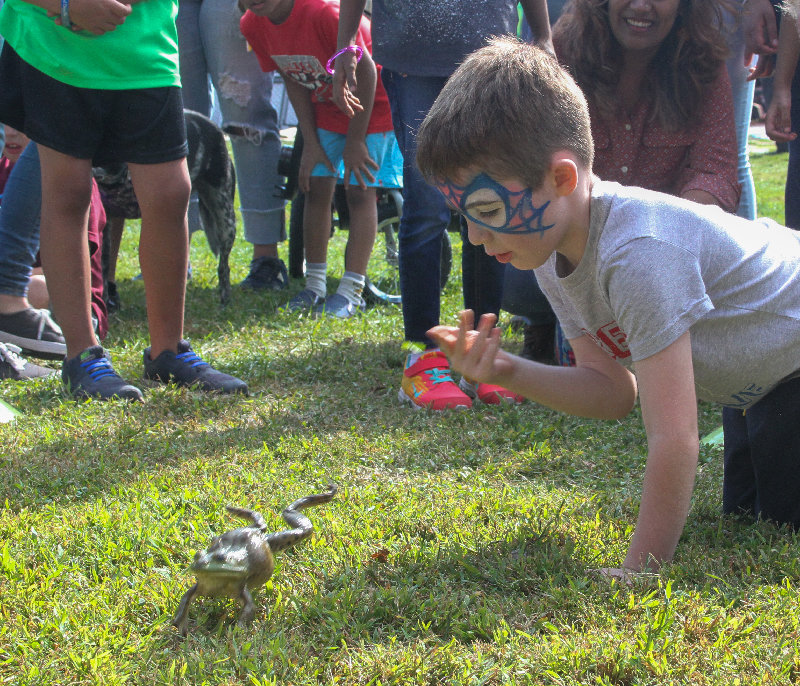 Frog jumping is always a favorite event.