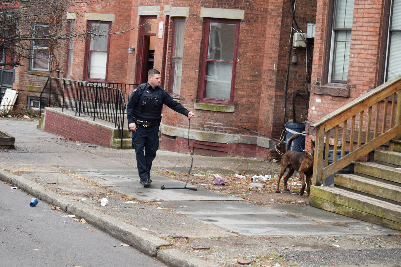 A City of Newburgh Police K-9 unit investigating the area of Lander Street were shots were reportedly fired.
