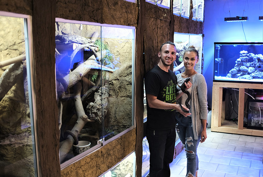 Vincenzo and Krystle Caci stand in front of the reptile cases at their Caci Barber Shop and Reptilium in Highland. Vincenzo is holding one of his beloved snakes.