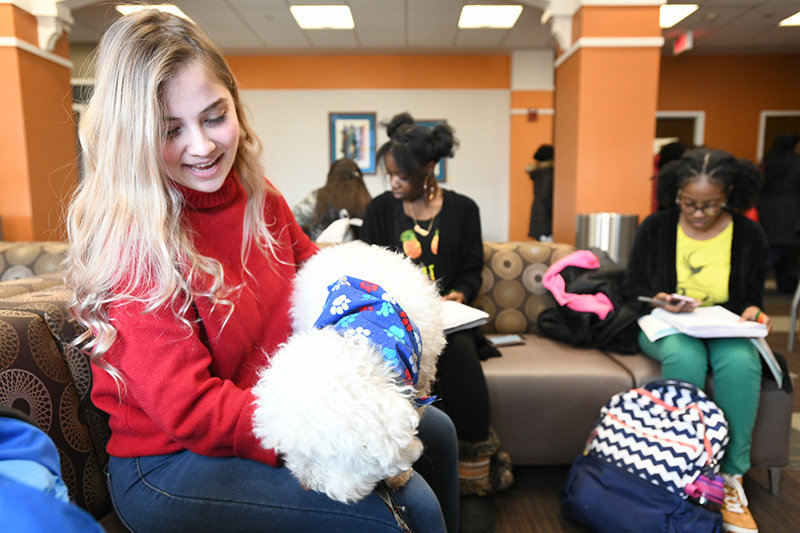 Therapy dogs from Hudson Valley Paws for a Cause visit Mount Saint Mary College so students can take a break.
