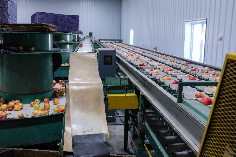 The Trapani Farm now has an apple sorting machine that cuts down on the time it takes to pack apples.