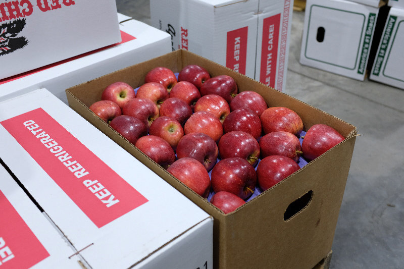 A perfect box of Red Delicious apples that were grown on the Trapani Farm.
