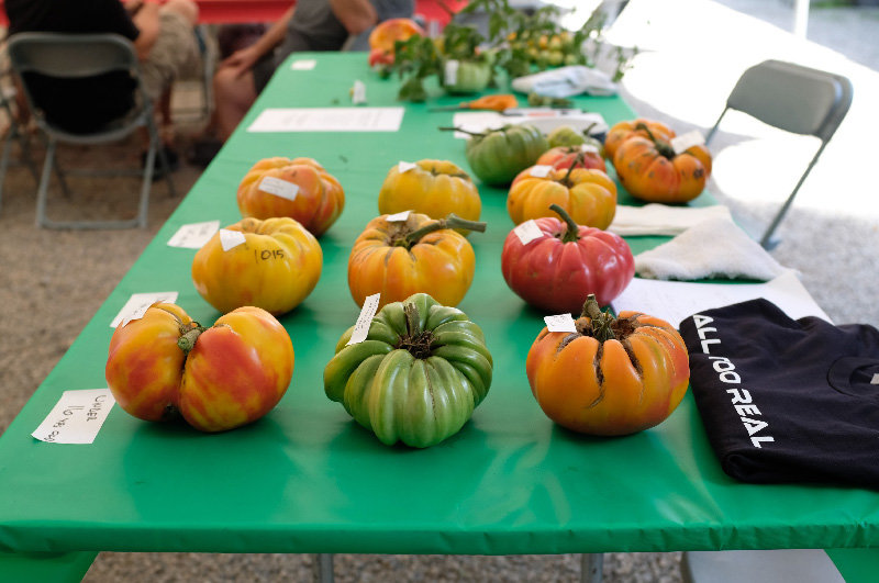 A view of the tomatoes entered in the UNICO Tomato Contest for 2019.