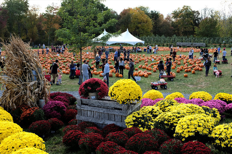 Mums are always big sellers in the fall, keeping alive the colors of summer.