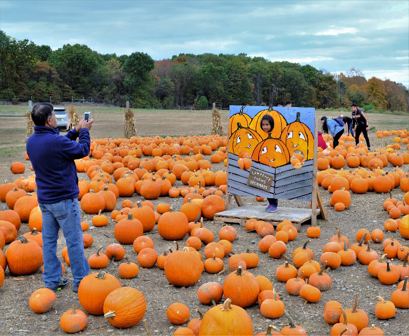 A father takes a picture of his daughter in the pumpkin patch at Lawrence Farms Orchards.