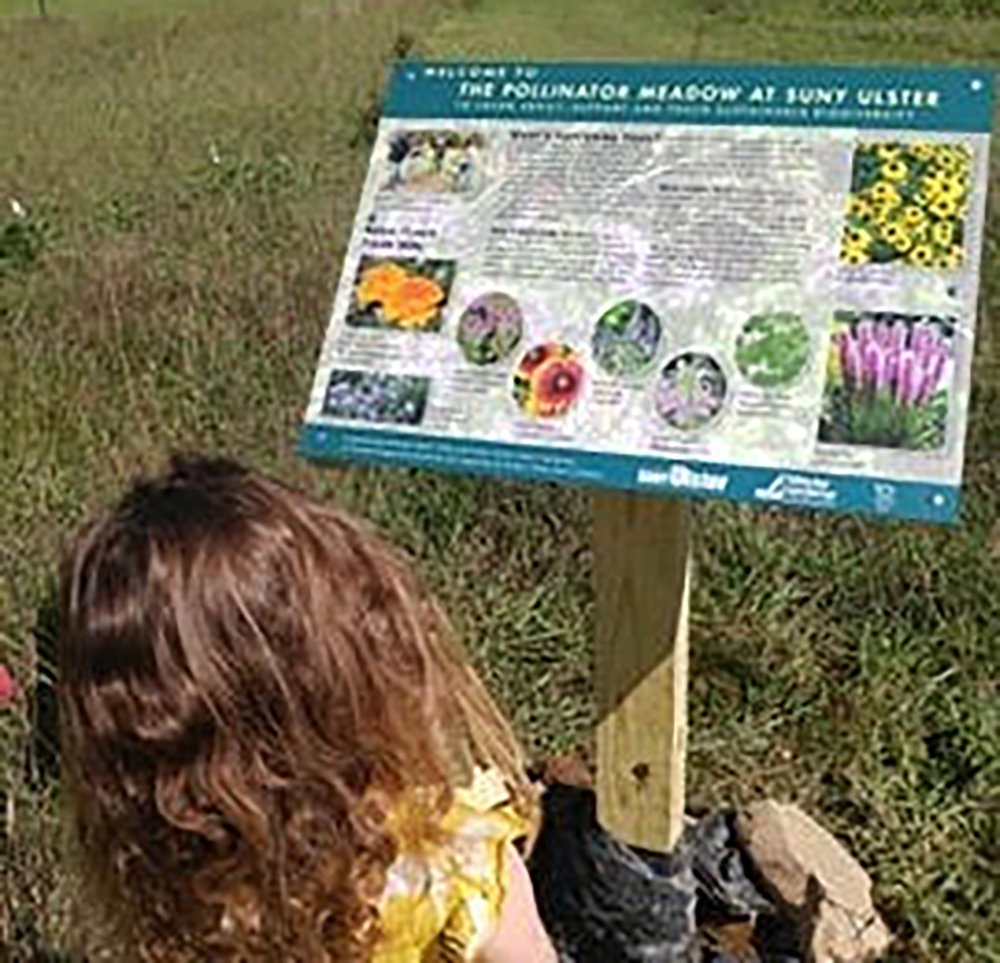 Photo of a lady bug after being released at the Master Gardener's Xeriscape Garden at SUNY Ulster and a staff member's daughter learning from the new pollinator sign that was installed on Tuesday, September 1.