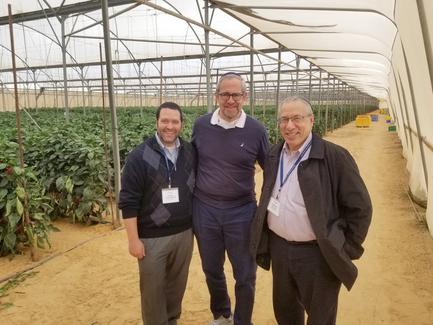These three Five Towns rabbis visited one of the hundreds of greenhouses of the Halutza Communities along Israel's Egyptian and Gazan borders, during a Long Island Rabbis for Israel Mission with the Jewish National Fund. Rabbis (from left) Aaron Feigenbaum of the Irving Place Minyan in Woodmere, Kenneth Hain of Congregation Beth Sholom in Lawrence, and Hershel Billet of the Young Israel of Woodmere also planted trees in the Neot Kedumim Biblical Forest, an iconic symbol of JNF's work over the past century.