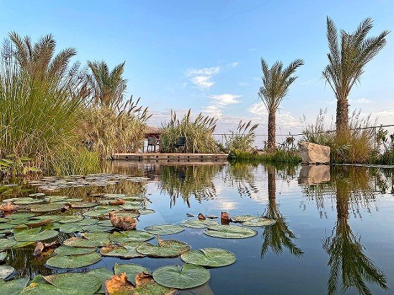 """In the heart of the biblical """"Wilderness of Zif"""" where King David composed many of the Psalms and hid from King Saul, the Arugot Farms has been transformed from a barren desolate wilderness to a Garden of Eden-like oasis."""
