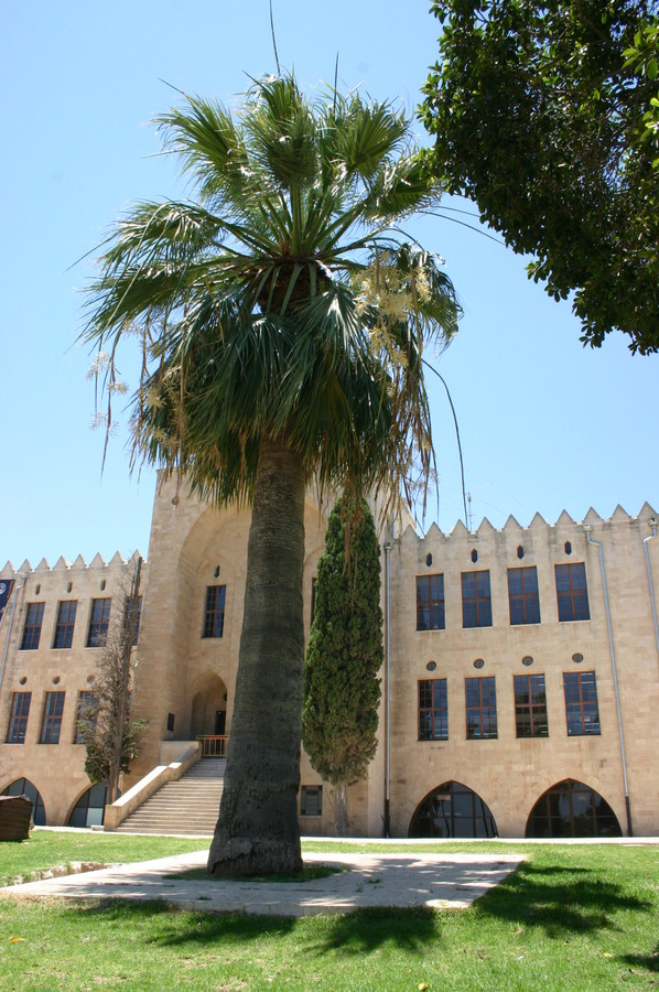 Among Israel's unusual trees is the Einstein's Palm at Technion-Israel Institute of Technology in Haifa. In 1923, Albert Einstein and his wife, Elsa, visited the Technion, which was still a work in progress at that time. In honor of the visit, they were invited to plant two palm trees, which still flank the original building. A visit to Einstein's palm helps unveil the story of this institution and the important part it played in the development of the country.