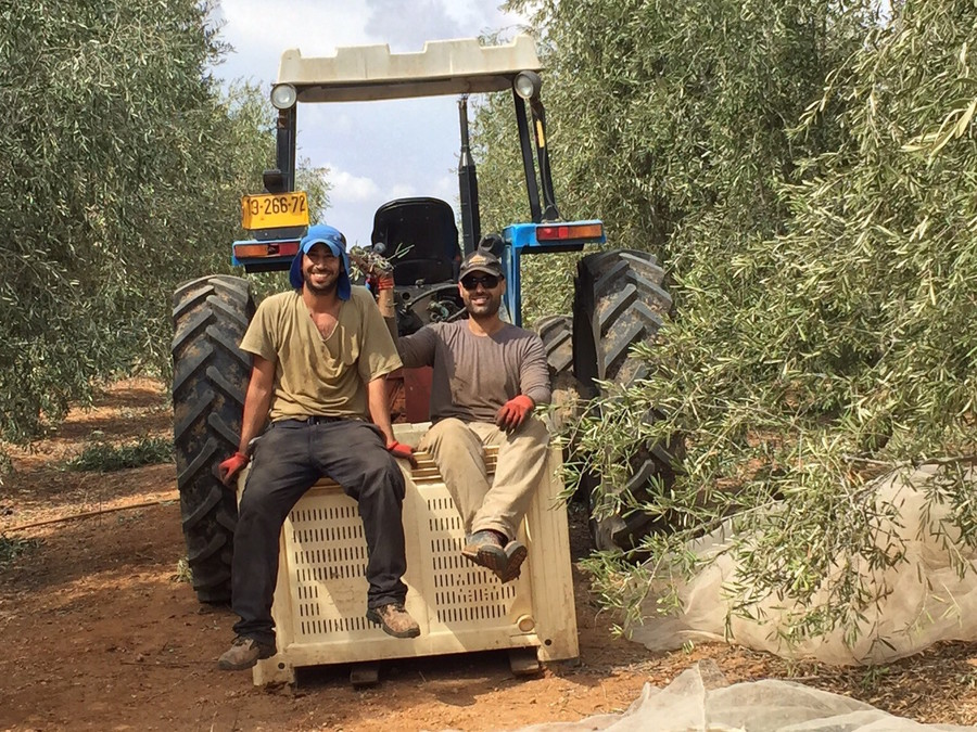 Workers on a tractor at Kibbutz Ruhama, in 2016.