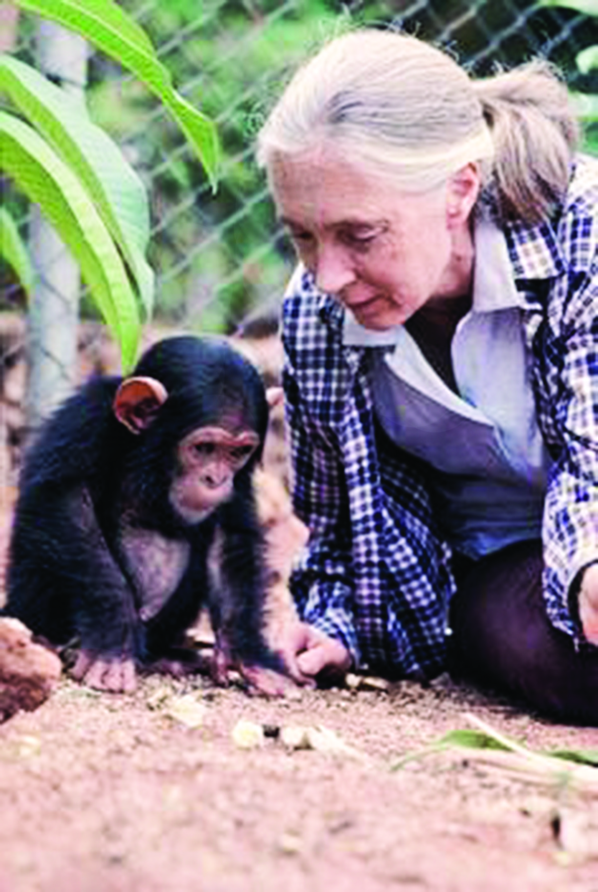 opinions of jane goodall I'm nearly done with this book and think it is amazing jane is my hero who else has read it did it change your views have you.
