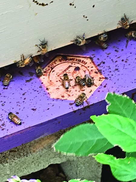 Local bees hard at work.