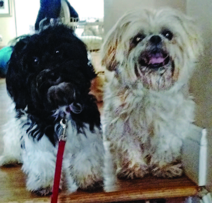 Lucky (left) and Buster (right) belong to Gary and Roberta Serby of East Greenwich.