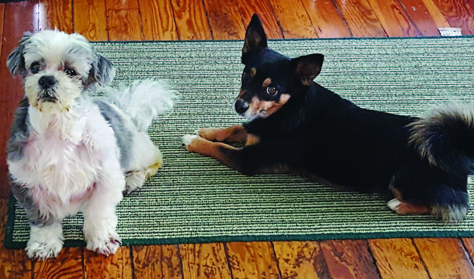 Mason (left) and Cora (right) belong to Judy Seplowin .