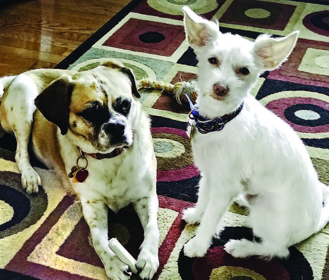 Gracie and Georgie belong to Jeff Sock and Dennis Morrell of Cranston.