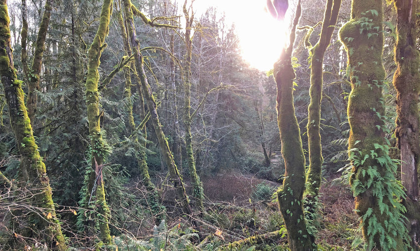 Rocky Creek Preserve