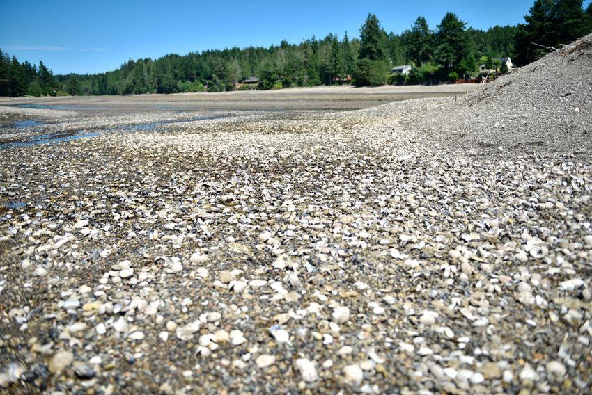 Algal toxins were responsible for summer shellfish catastrophe.