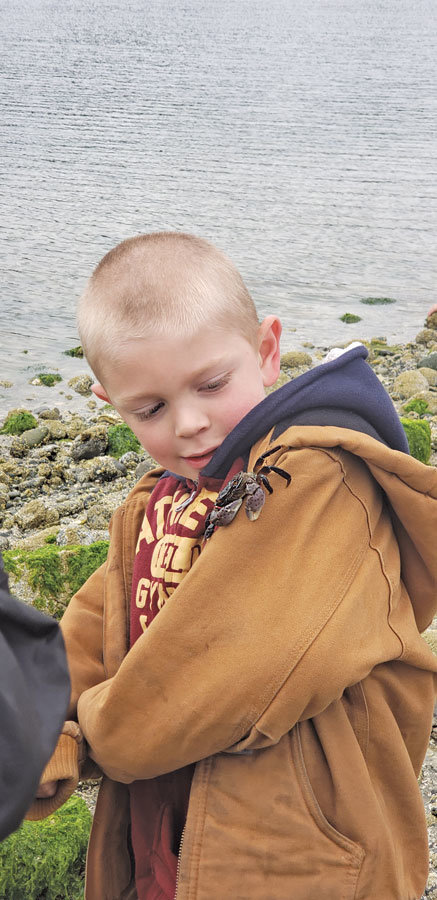 "Evergreen Elementary School scientist D.J. Taylor, 7, tests the locomotive ability of a local purple shore crab, Hemigrapsus nudus, during an end-of-year field trip near Penrose Point Park. ""He climbed faster than I thought,"" Taylor said. Photo: Sara Gray"