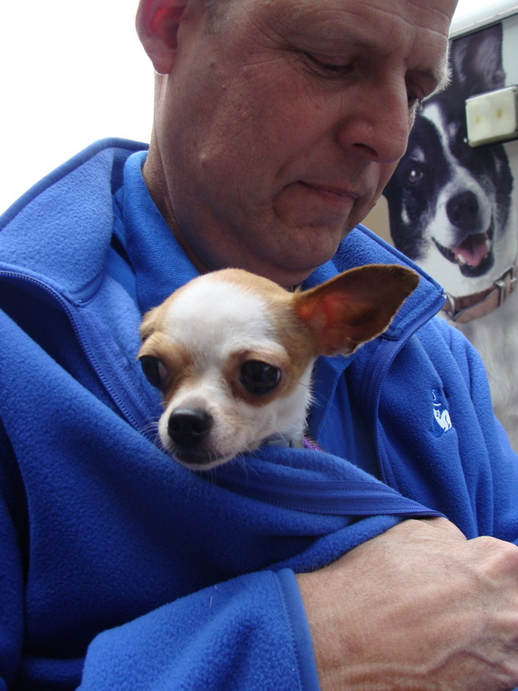 Dog Behavior Manager Mike Malloy keeps a teacup Chihauhau warm.