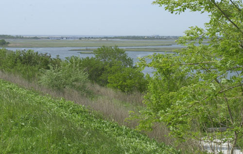 Wetlands to the south of Freeport, as seen from atop the Levy Preserve in Merrick.