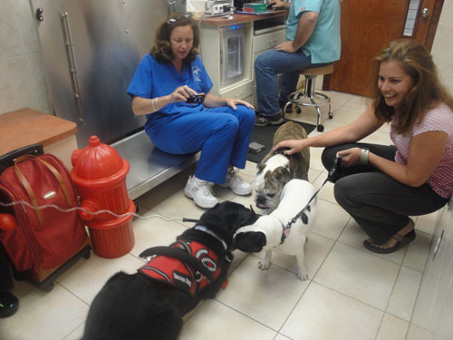 Service dog Harvey greets Georgia and Molly, who were at Central Vets for the H3N8 vaccination, Nobivac.