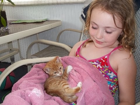 "Sarah Zwart, of Levittown, held ""Tony the Tiger,"" the only kitten currently found from the cat and kittens that were misplaced by the Town of Hempstead Animal Shelter."