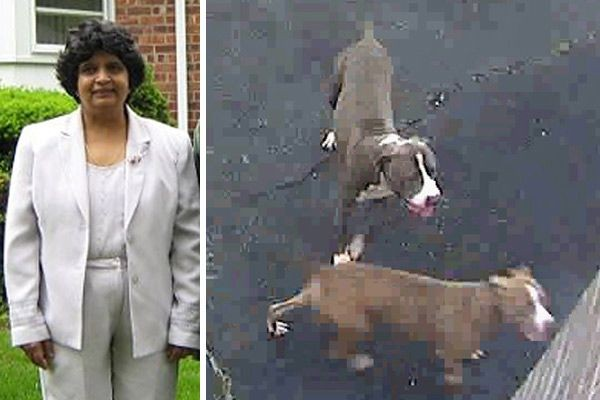 Two pit bulls attacked Shashi Sharma at the Brookside School in North Merrick last Thursday. The brown pit bull remained on the loose as of press time on Tuesday.
