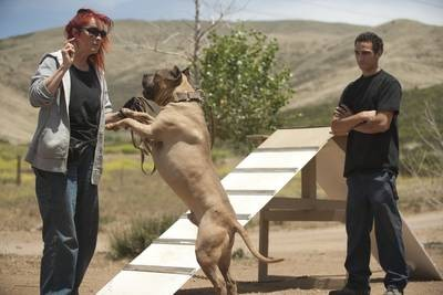 Abused Elmont pit bulls find home in Los Angeles | Herald Community