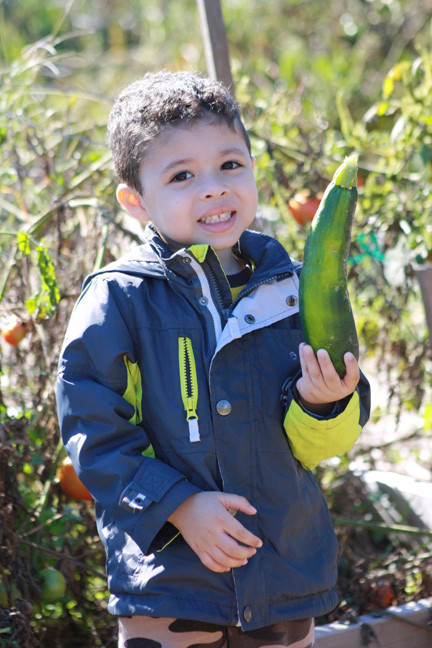 Malcolm Camilo, 3, picked a cucumber from the vegetable garden last Saturday.