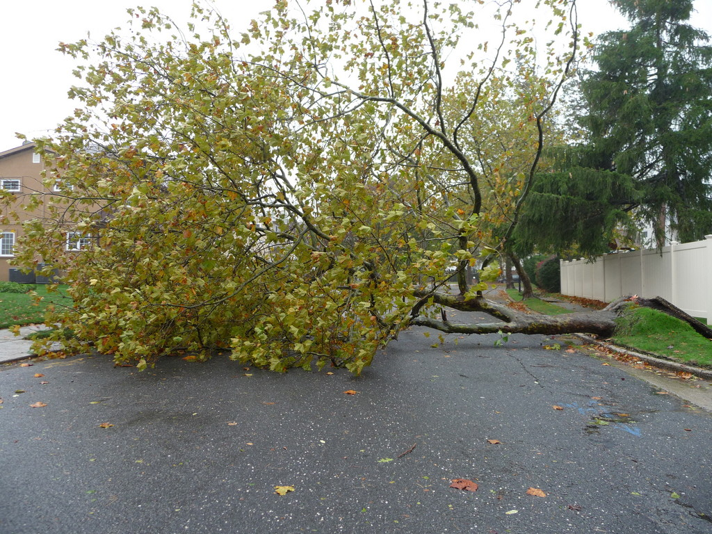 In North Woodmere on Cedarhurst Street by Woodmere Drive this tree was felled at 12:50 p.m. on Monday.