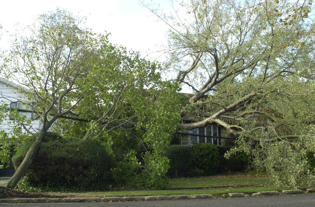 Trees fell into homes throughout Bellmore-Merrick, like these on George Court in south Merrick.