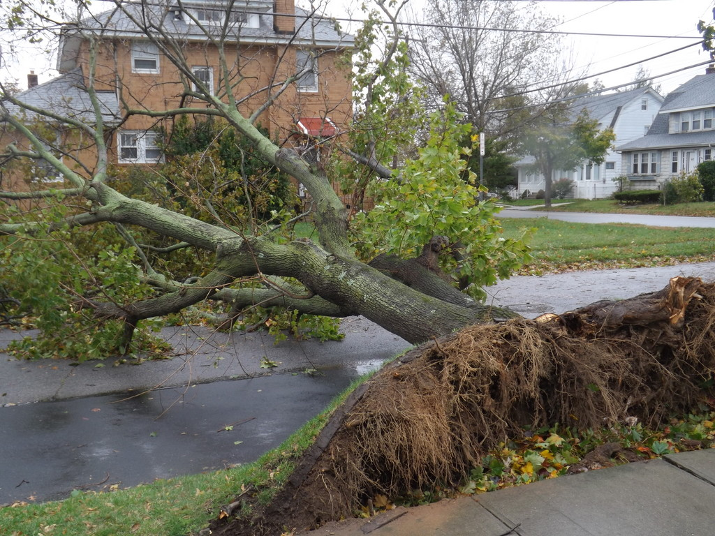 A large tree fell on West Melrose Street, one of 165 that went down onto a village road.