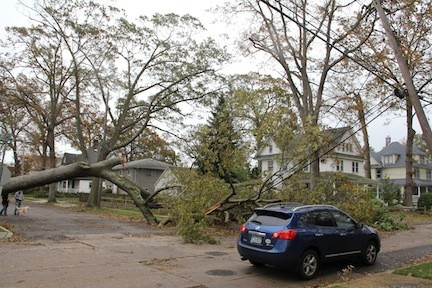 A tree took down wires on Driscoll Street.
