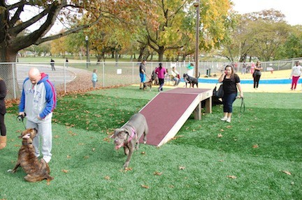 Dogs and their owners seemed to enjoy the new artificial-turf surface.