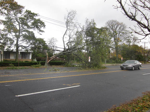 Cars were forced to navigate around this fallen tree in front of Temple Emanu-El on Merrick Avenue.