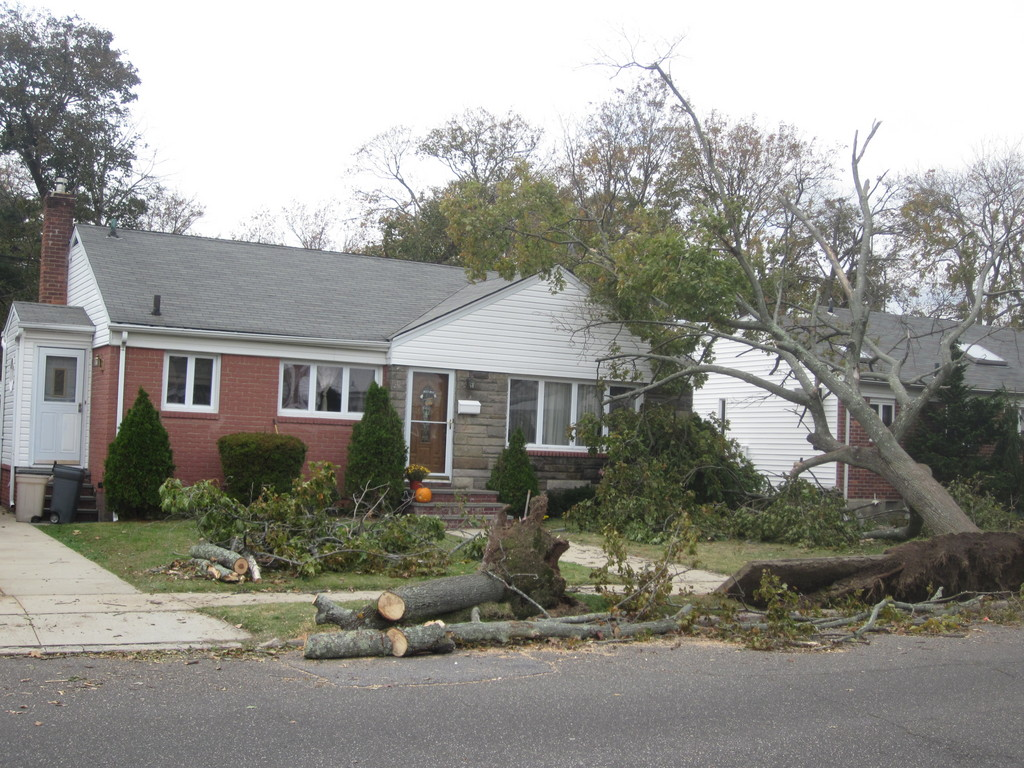 A tree sits atop a home on Clearmeadow Drive.