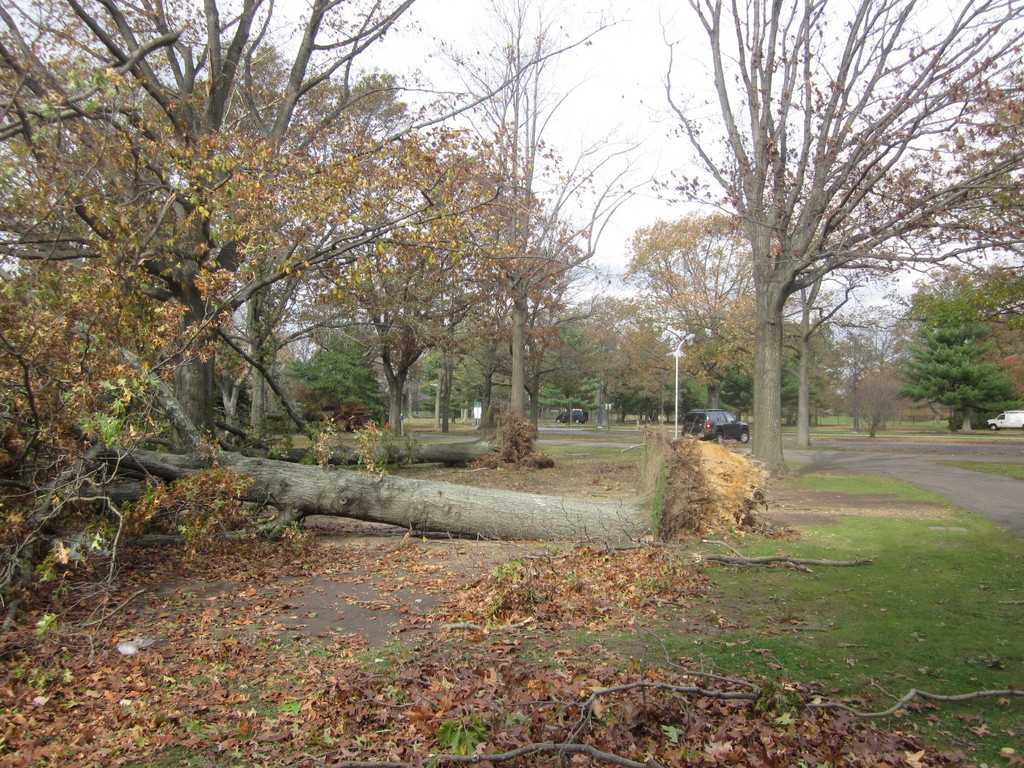 Downed trees in Eisenhower Park