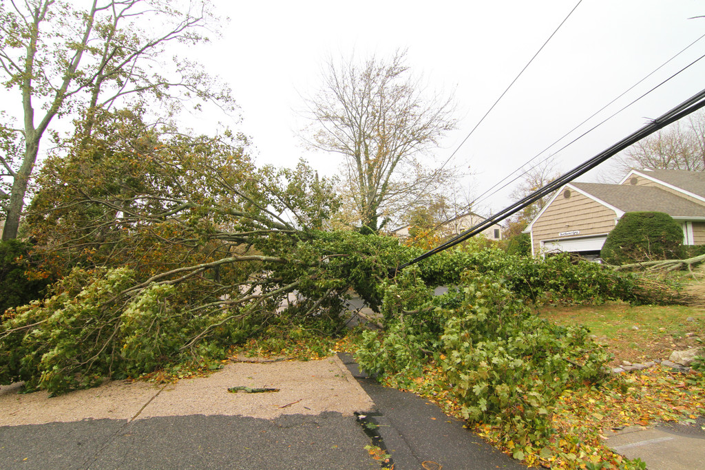 Muriel Avenue in Cedarhurst was blocked off and power line was down because of a fallen tree.