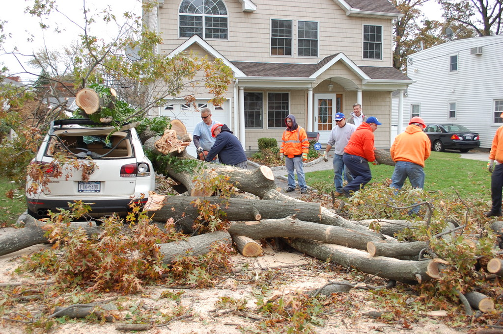 Village workers cleared a large tree on Thursday that fell on two cars in the driveway of a Stuart Road home in Gibson.