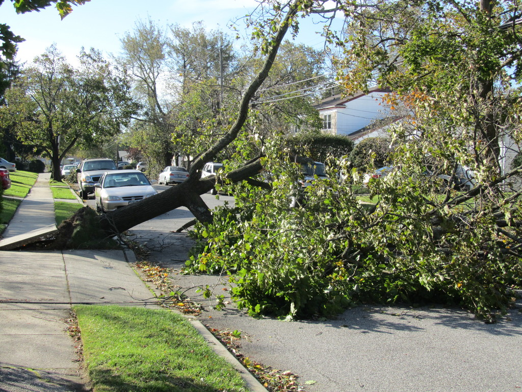 Fendale Street had no downed trees like this one to take down power lines.