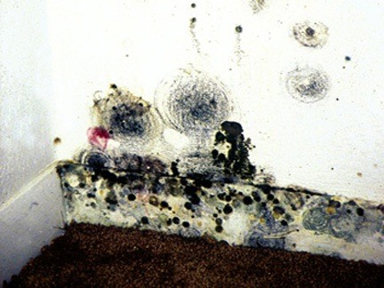 Mold growing on a home's wall.