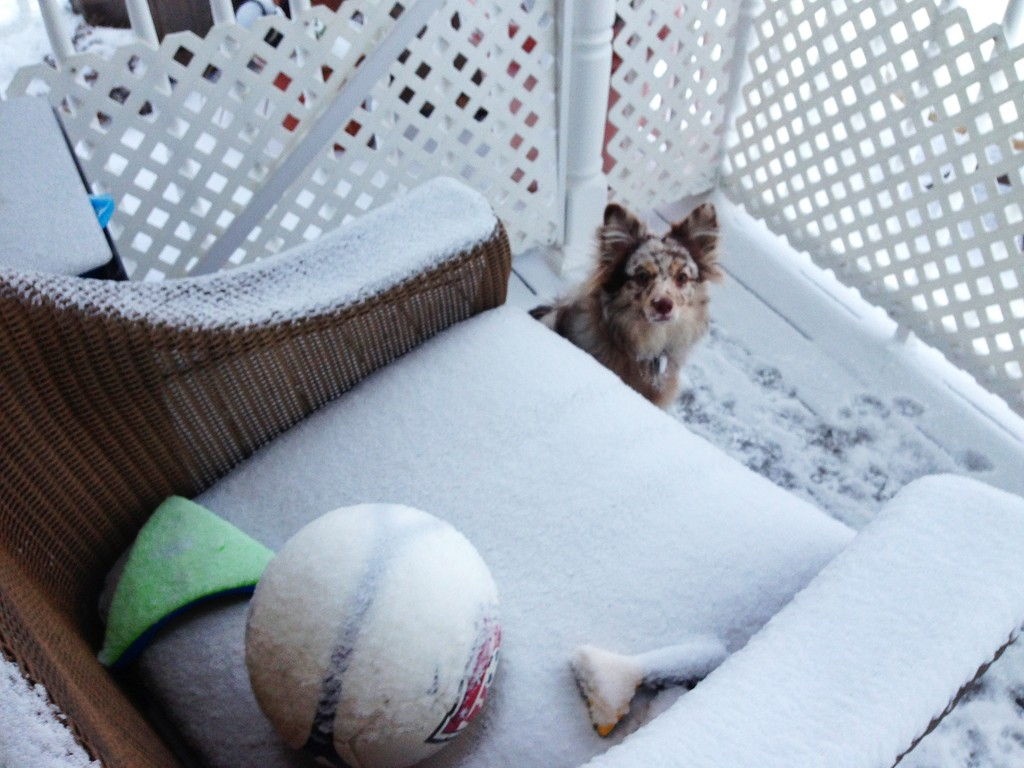 Seven-month-old Shea came out to find its toys covered in snow!