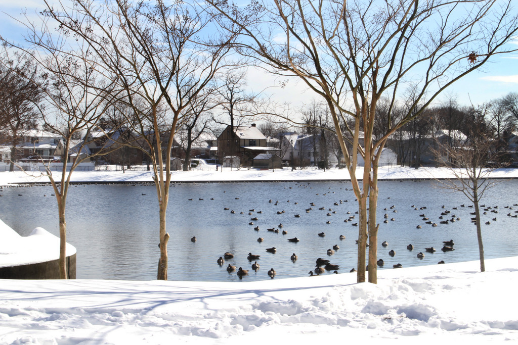 The snow added to the scenery at Valley Stream's Hendrickson Park.