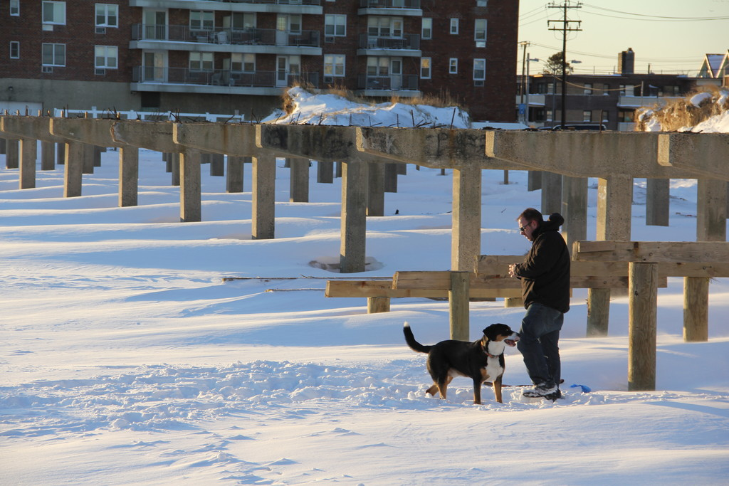 Tom Anderson brought his snow loving dog, Titan, down to the beach for a little fun.