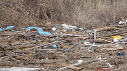 The South Shore�s wetlands are covered in debris that washed up during Hurricane Sandy. Above, the shoreline in Merrick.