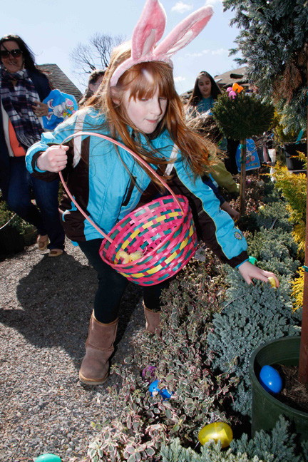 Allison Sinnott, 7, pulled an egg from a bush at Cipriano Nursery and Florist of East Meadow during its annual Easter Egg Hunt.